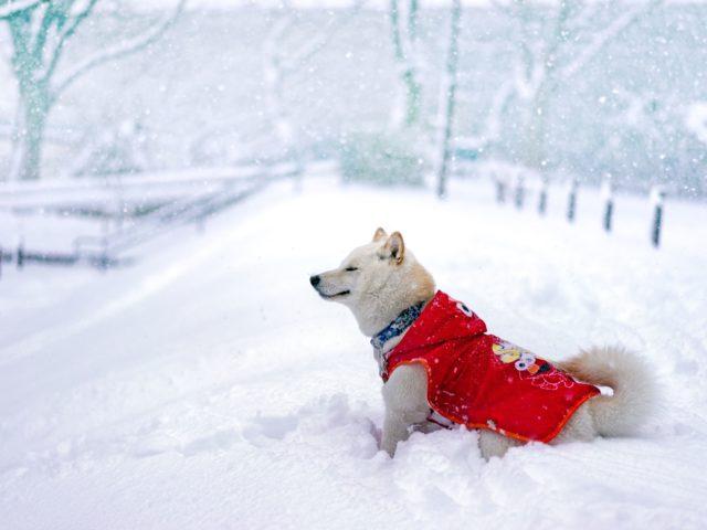 Горнолыжный тур «В Японию за снегом!»