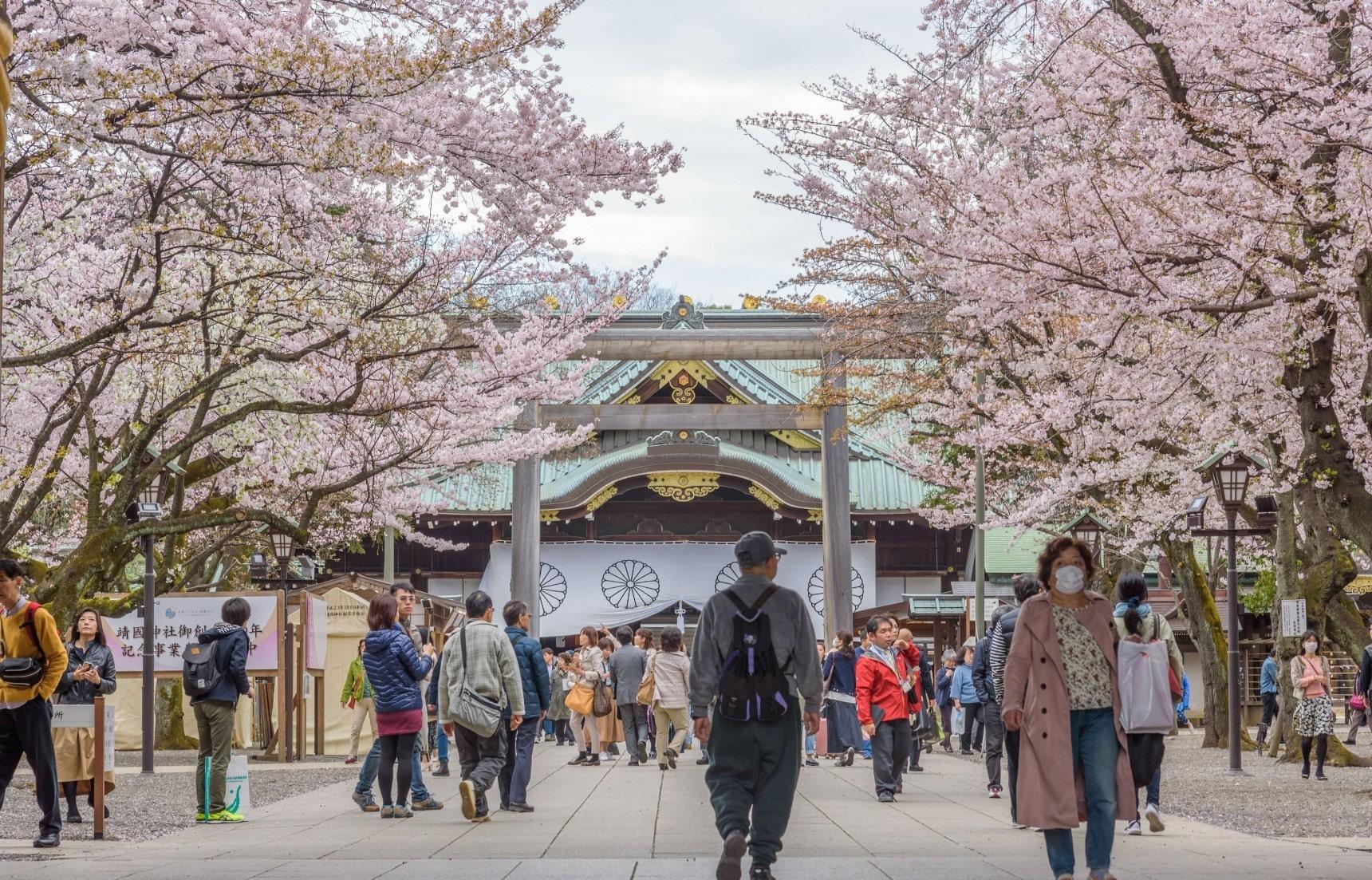 Начало сезона сакуры в Токио!